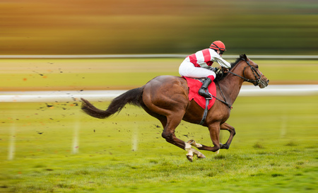 Race horse with jockey on the home straight