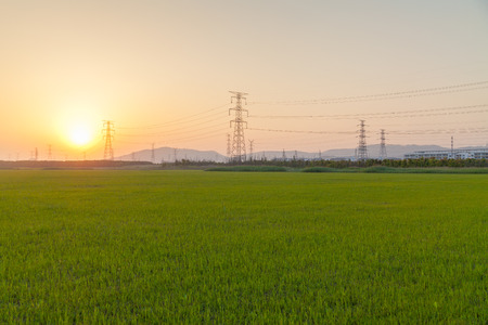 Sunset scenery with electric towers