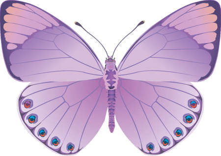Butterfly Lilac Fantasy
