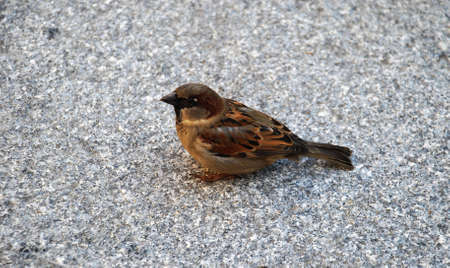 Townsresident. A sparrow. Birds live near to us in city. A sparrow is from them our most frequent the neighbor.