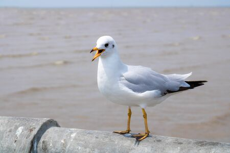 Photo for Seagulls standing on the edge of the bridge - images - Royalty Free Image