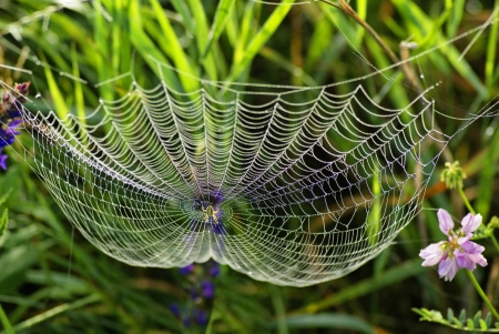 Photo pour Web of the spider and dew Spider web with water drops - image libre de droit