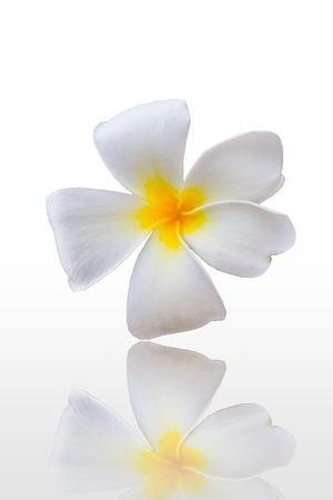 isolated plumeria on white background