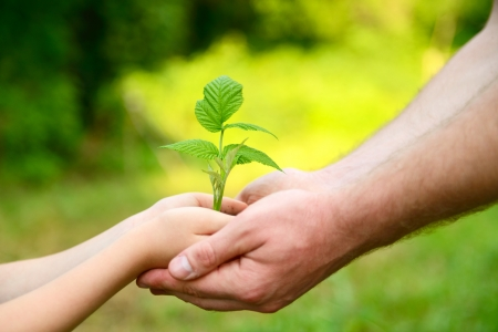 Father's and son's hands holding green growing plant over nature background