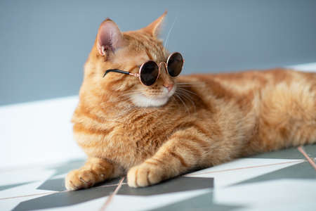 Photo pour Fashion red tabby cat wearing sunglasses posing indoor. Adorable young pet. - image libre de droit
