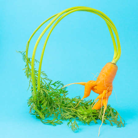 Photo for Strange funny shaped carrots on a blue background. Vegetable crops concept, levitation effect. Minimalism, copy space. Ugly carrot. - Royalty Free Image