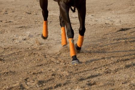 leg of running horse on sand field