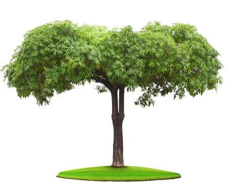 Foto de tree plant on green field - Imagen libre de derechos