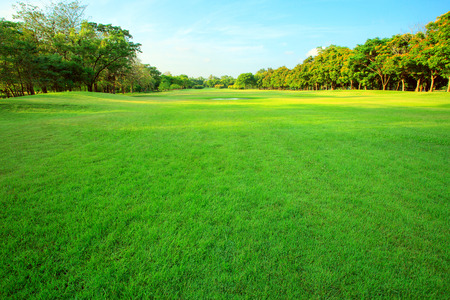 Photo pour beautiful morning light in public park with green grass field and green fresh tree plant perspective to copy space for multipurpose - image libre de droit