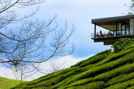 Tea plantation in cameron highland in Malaysia.