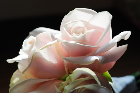 Closeup deatil of brides pink roses at wedding