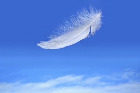 white feather falling on blue sky background