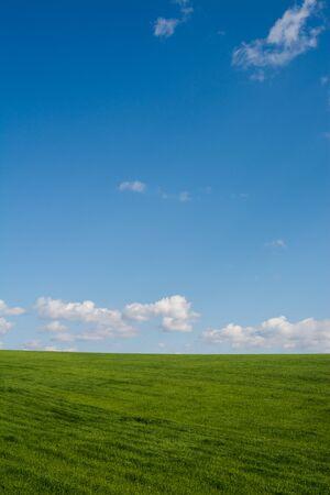 Photo pour Green meadow and blue sky - image libre de droit