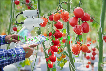 Foto de Farmer using digital tablet control robot to harvesting tomatoes in agriculture industry, Agriculture technology smart farm concept - Imagen libre de derechos