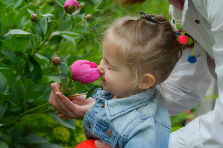 Little girl sniffs pink peonies in the garden