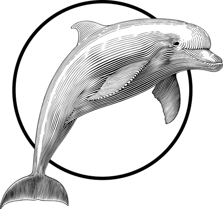 black and white illustration of jumping dolphin engraving style. Frame can be  removed easily.