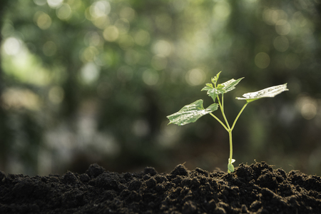 Photo pour Seedling and plant growing in soil and copy space for insert text - image libre de droit