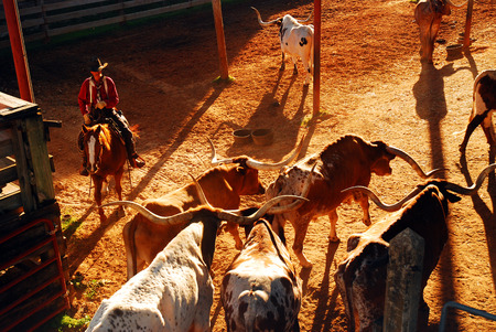 Roundup at the Ft Worth Stockyards