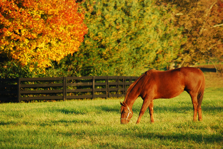 Photo pour Autumn, Horse Country - image libre de droit