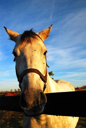 Kentucky Blue Grass is Horse Country