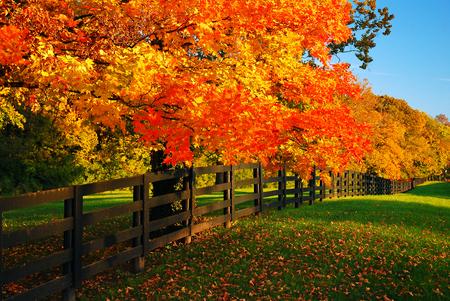 Foto de Rural autumn - Imagen libre de derechos