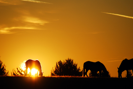 The sun rises on horses grazing in a meadow