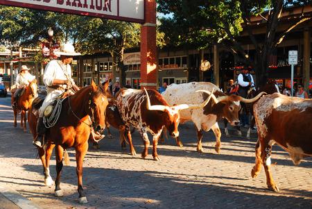Foto für The Famous Ft Worth Stockyards Cattle Drive - Lizenzfreies Bild