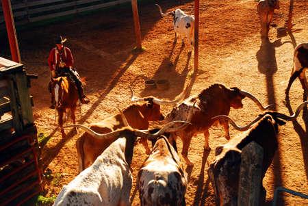 Foto für A cowboy begins the Roundup at the Ft Worth Stockyards - Lizenzfreies Bild