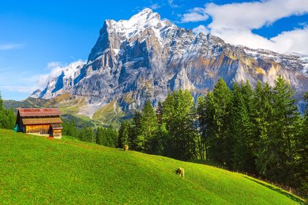 Photo pour Grindelwald, Switzerland aerial autumn Swiss Alps mountains panorama landscape, wooden chalet on green field and high snow peaks in background, Bernese Oberland, Europe - image libre de droit