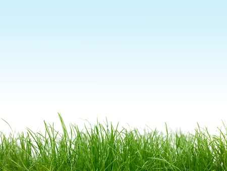 Green grass isolated against a blue sky