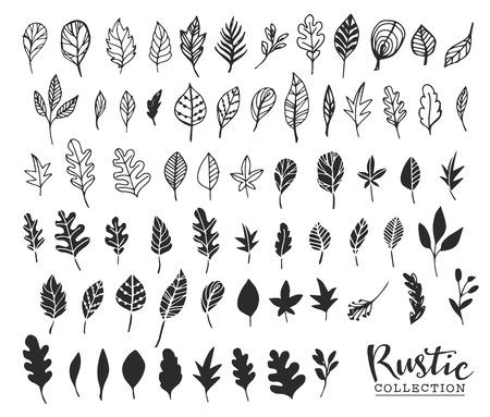 Hand drawn vintage leaves. Rustic decorative vector design elements.