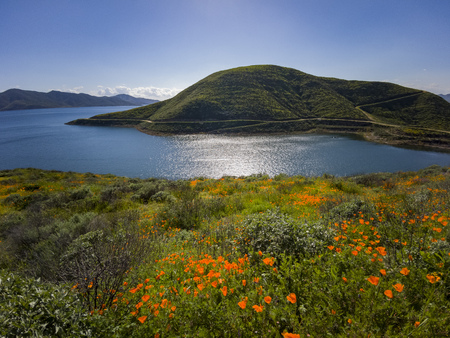 Photo for Lots of wild flower blossom at Diamond Valley Lake, California - Royalty Free Image