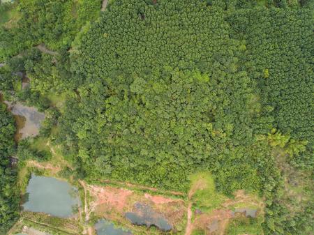 Photo pour Aerial view of rubber plantations. - image libre de droit