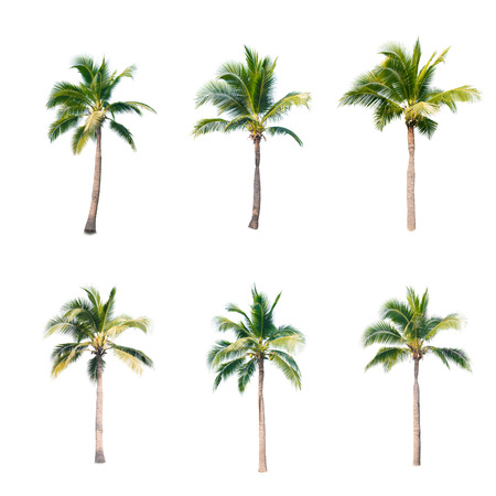 Foto de coconut trees on white background - Imagen libre de derechos