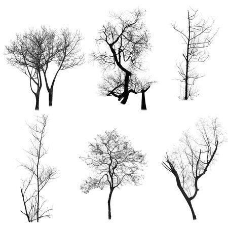 Photo pour Dead tree silhouette isolated on white background - image libre de droit