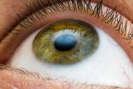 Photo for male eye of yellow, green and some blue colors close-up - Royalty Free Image