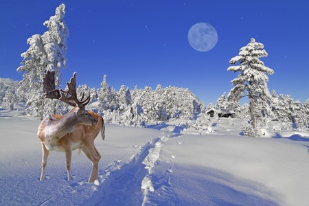 A reindeer is waiting for Santa at the North Pole