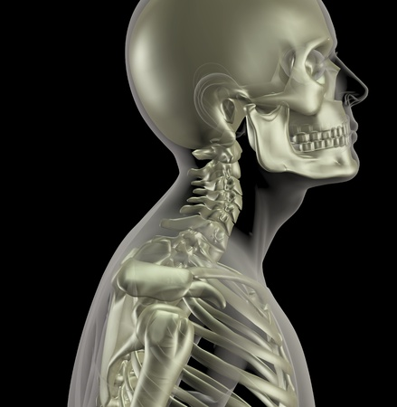 3D render of a male medical skeleton with a close up of the neck bones