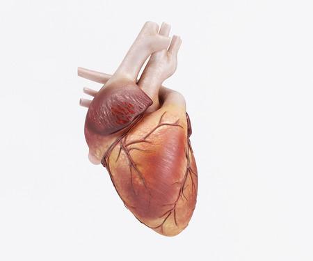 Photo pour 3D Render of a healthy Human Heart - image libre de droit