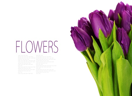 bouquet of the fresh tulips on white background (with sample text)