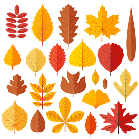Illustration for Set of tree autumn leaves isolated on the white. Cartoon vector illustration. - Royalty Free Image