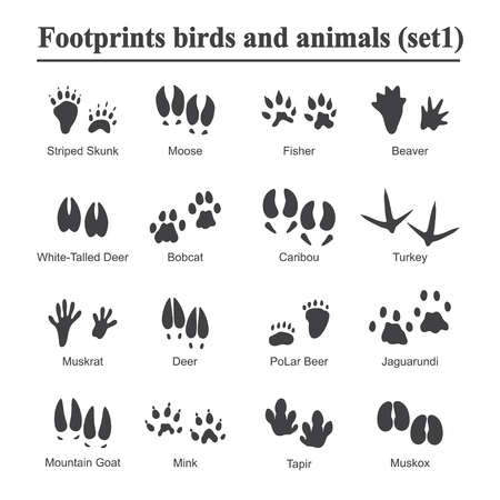 Photo pour Wildlife animals and birds footprint, animal paw prints vector set. Footprints of variety of animals, illustration of black silhouette footprints. - image libre de droit