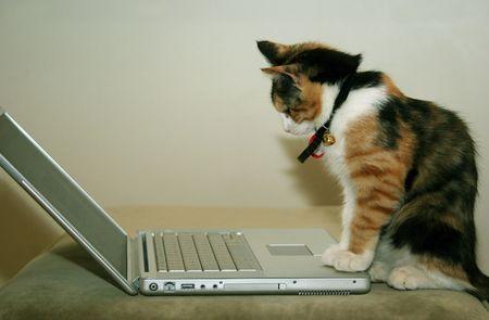 A kitten using a laptop