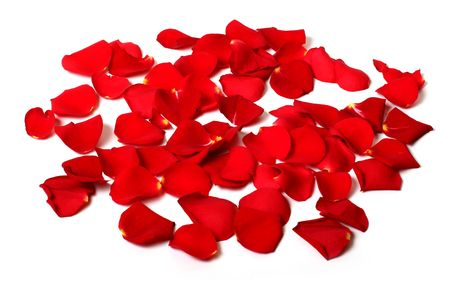 Scattered rose petals on white