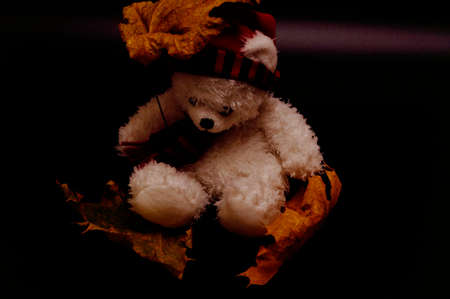 Photo pour White and red teddy bear in a red cap and a scarf with dry leaves and an umbrella on a black background - image libre de droit
