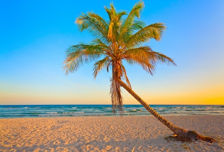 A coconut tree on a deserted tropical beach at sunset