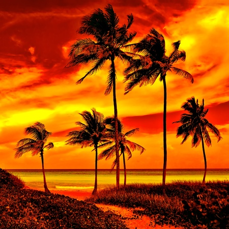 Photo for Very colorful sunset  on a beautiful tropical beach - Royalty Free Image