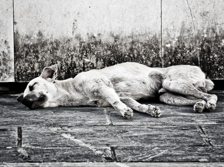 Black and white image of an abandoned homeless stray dog sleeping on the street
