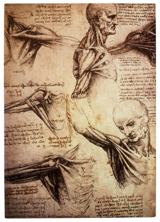 Ancient drawings by the renaissance artist and scientist Leonardo DaVinci studying the human body