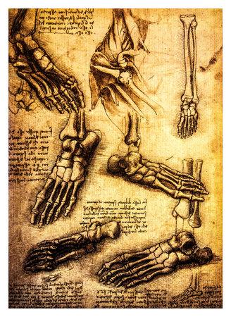 Ancient anatomical drawings made by Leonardo DaVinci, a study of the human body